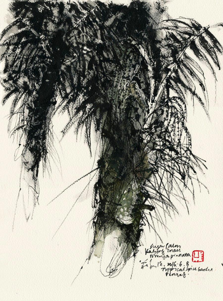 20160608 Sugar Palm, Tropical Spice Garden