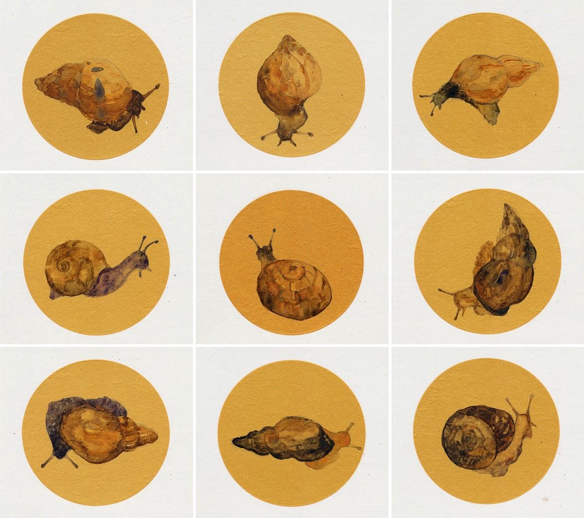 20161117-slow-snails